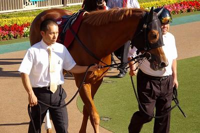府中牝馬Sはサマー2000王者イタリアンレッドが重賞3連勝!_b0015386_23571318.jpg