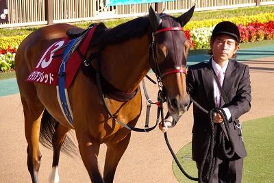 府中牝馬Sはサマー2000王者イタリアンレッドが重賞3連勝!_b0015386_23595829.jpg