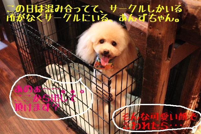 b0130018_10143596.jpg