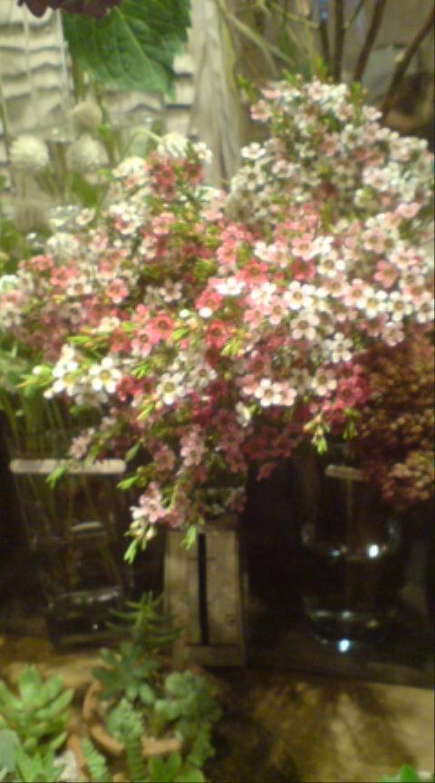 秋桜とオイルフラワー_c0103137_1750975.jpg