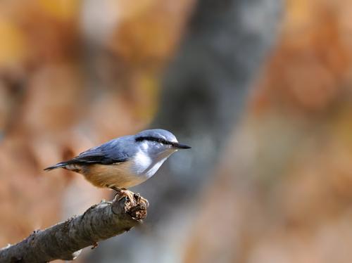 紅葉の小鳥たち(1)_a0204089_18494850.jpg