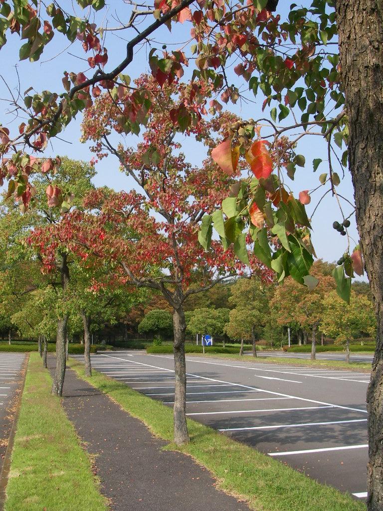 記念公園通信_b0172896_1619355.jpg