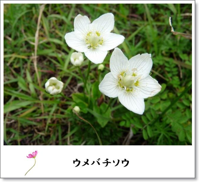 b0025101_1534153.jpg