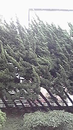 日本青年館の「杉」!_d0003502_2384679.jpg