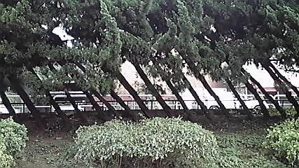 日本青年館の「杉」!_d0003502_2394375.jpg