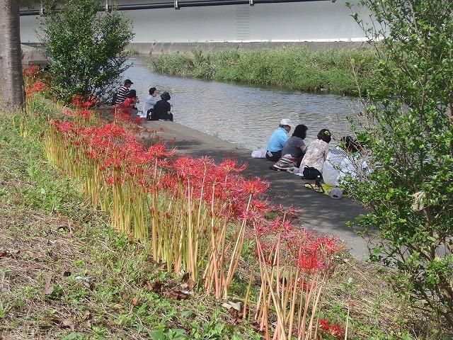 10月29日(土)に滝川で彼岸花の株分け・植付けを!_f0141310_6374817.jpg