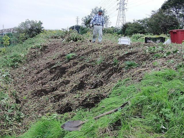 10月29日(土)に滝川で彼岸花の株分け・植付けを!_f0141310_6383925.jpg