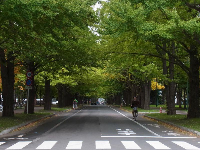 10月18日のイチョウとFUKUSHIMAプロジェクト_c0025115_191257.jpg
