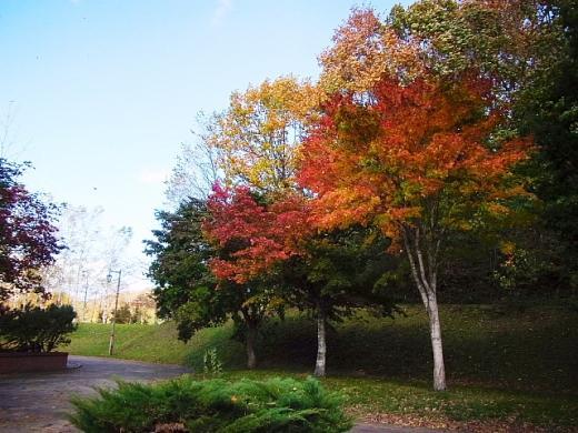 2011年10月18日(火):葉っぱ舞い散る_e0062415_17515182.jpg