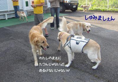 b0008217_21484536.jpg