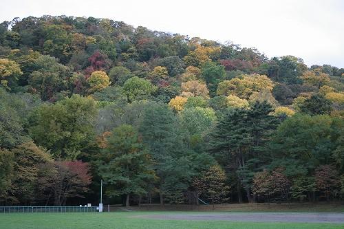 円山の秋_c0048117_19515512.jpg