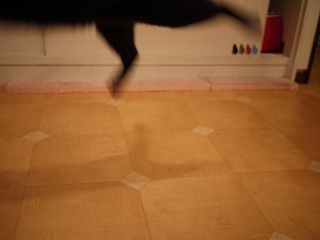 飛ぶ猫 ろった編。_a0143140_2323444.jpg