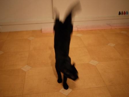 飛ぶ猫 ろった編。_a0143140_2325250.jpg