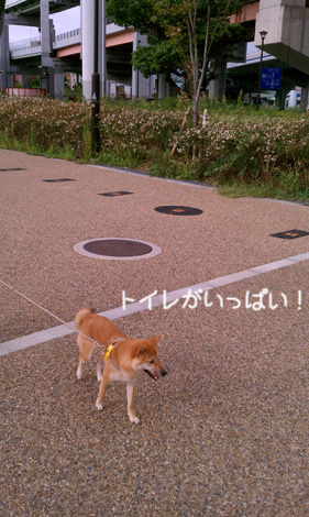 f0196559_19112074.jpg