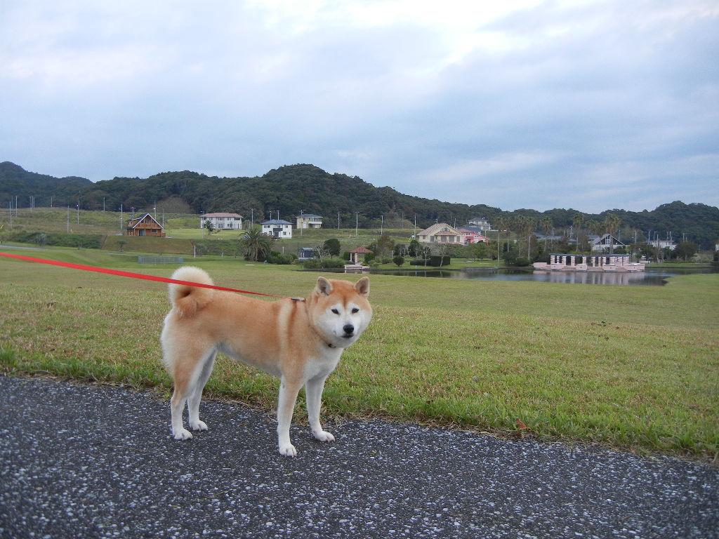 2011年10月18日(火)今日は寒いよ!_f0060461_10531667.jpg