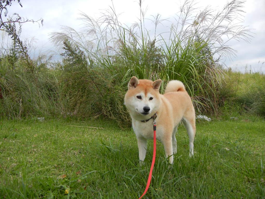 2011年10月18日(火)今日は寒いよ!_f0060461_10542395.jpg