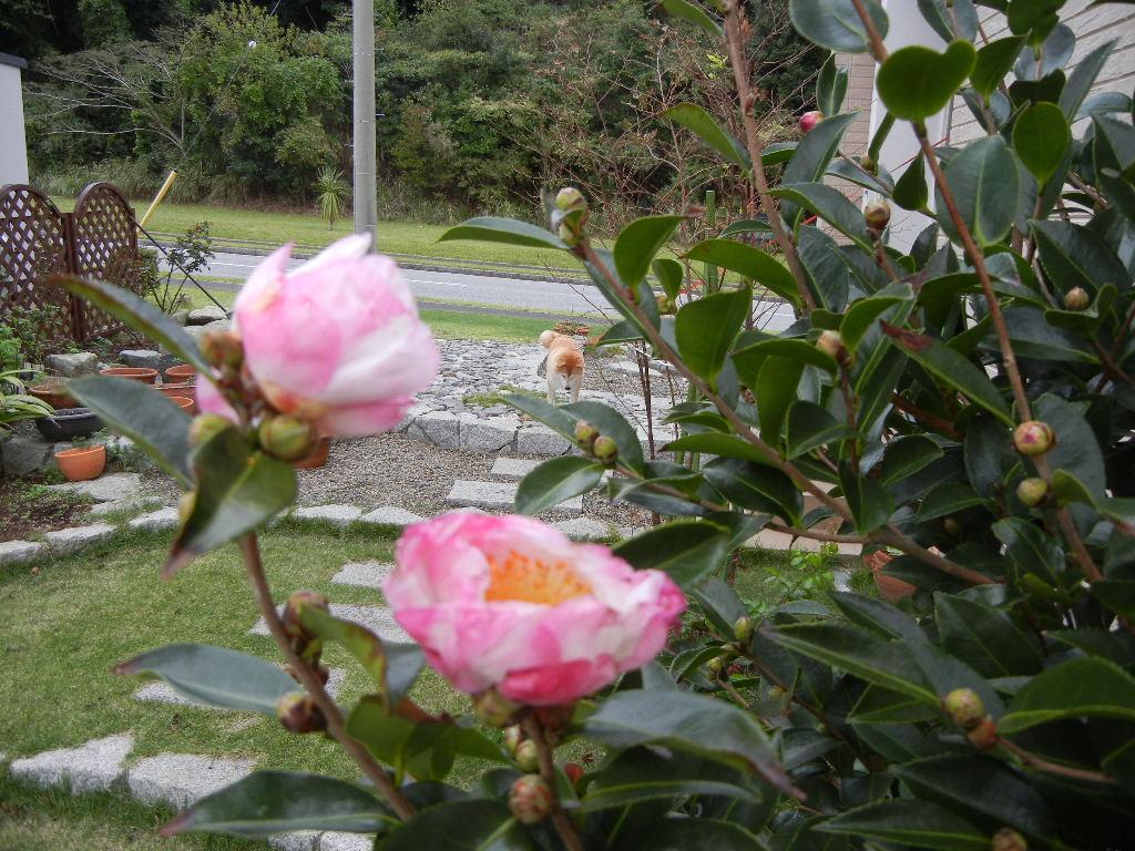 2011年10月18日(火)今日は寒いよ!_f0060461_1175697.jpg
