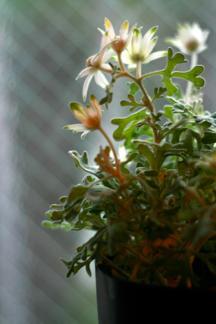 flower _b0209477_17231588.jpg