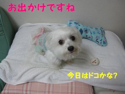 b0193480_20185589.jpg