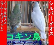 e0255102_18391357.jpg