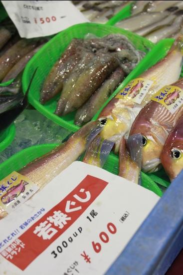 「ふくいの地魚情報館」が福井駅そばにオープン!_f0229508_1346364.jpg
