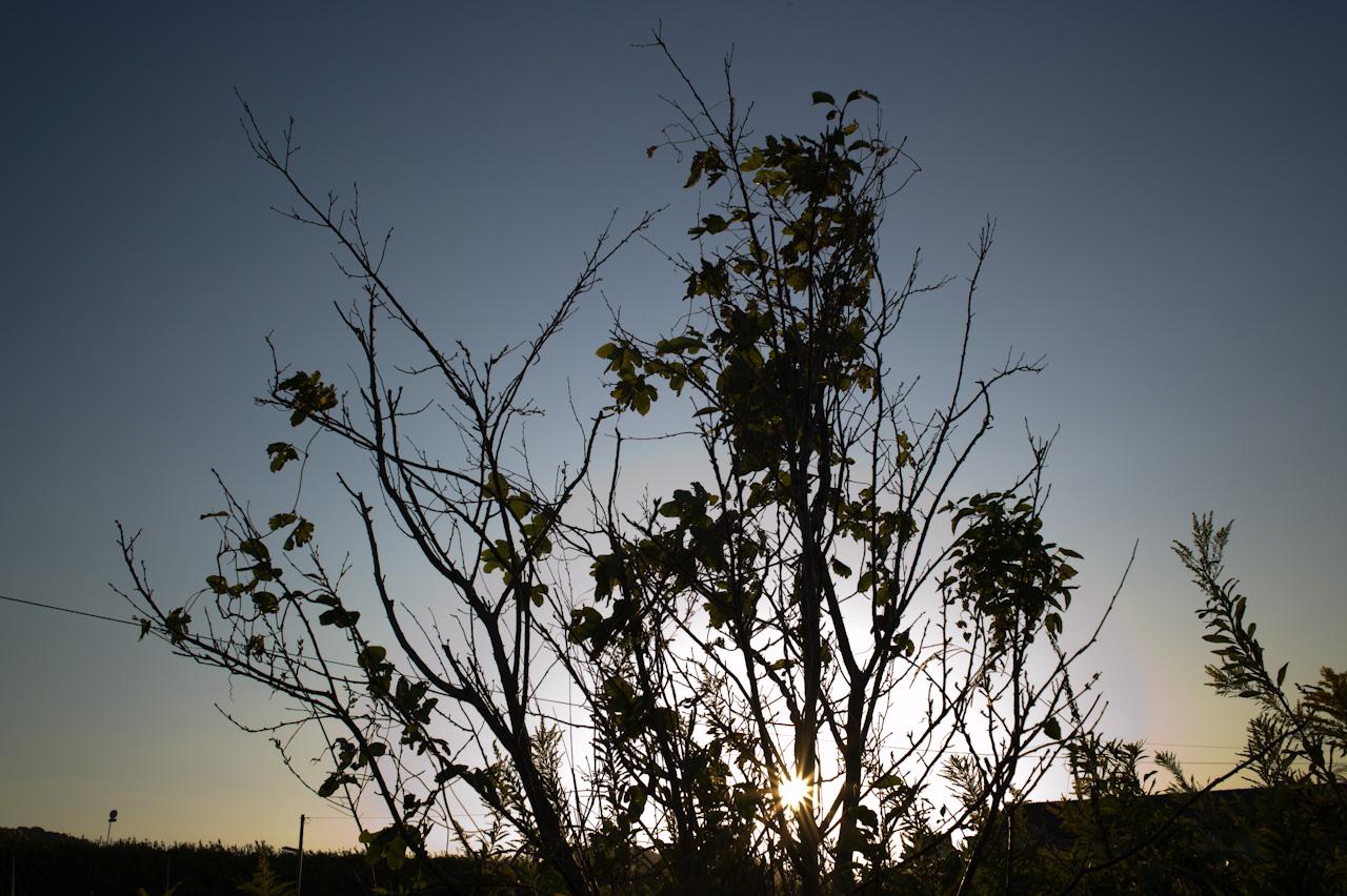 だんだん秋らしくなってきました_b0125014_204451.jpg