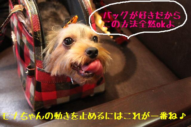 b0130018_1015166.jpg