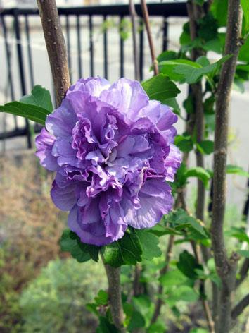秋の庭_f0129726_221082.jpg