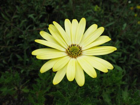秋の庭_f0129726_22154133.jpg