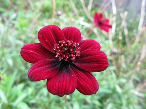 秋の庭_f0129726_22163224.jpg