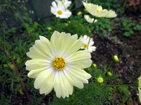 秋の庭_f0129726_221736100.jpg