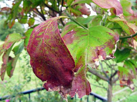秋の庭_f0129726_226883.jpg