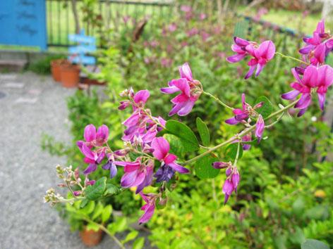 秋の庭_f0129726_228078.jpg