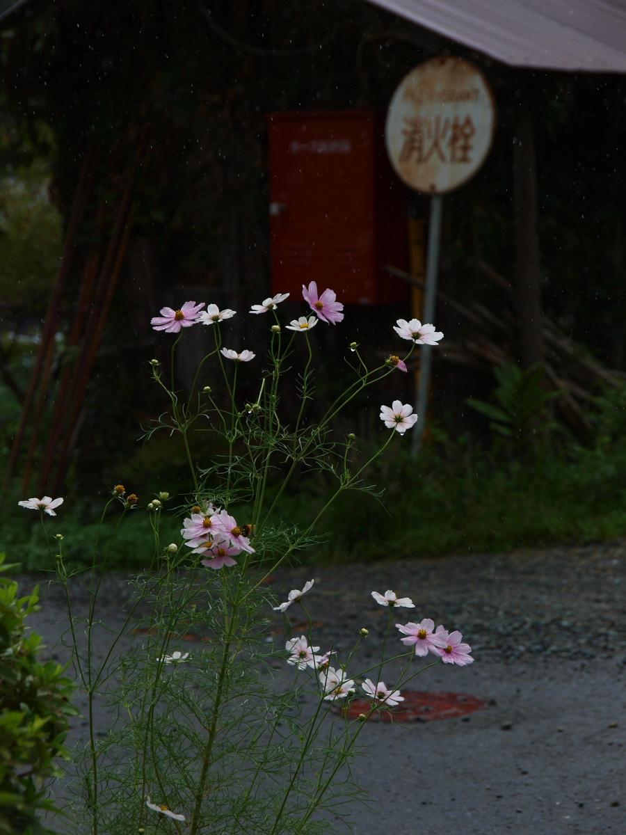 美山の里_f0021869_22283675.jpg