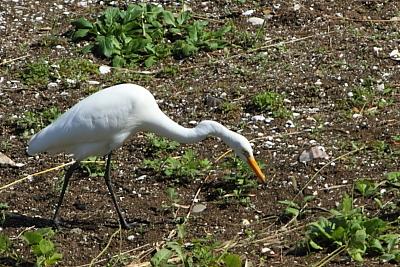 ★先週末の鳥類園(2011.10.15~16)_e0046474_13585022.jpg