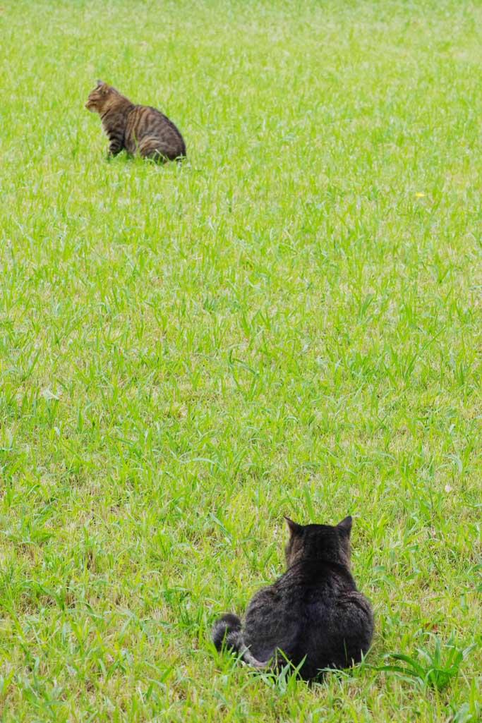 猫の世界_d0192516_18133220.jpg