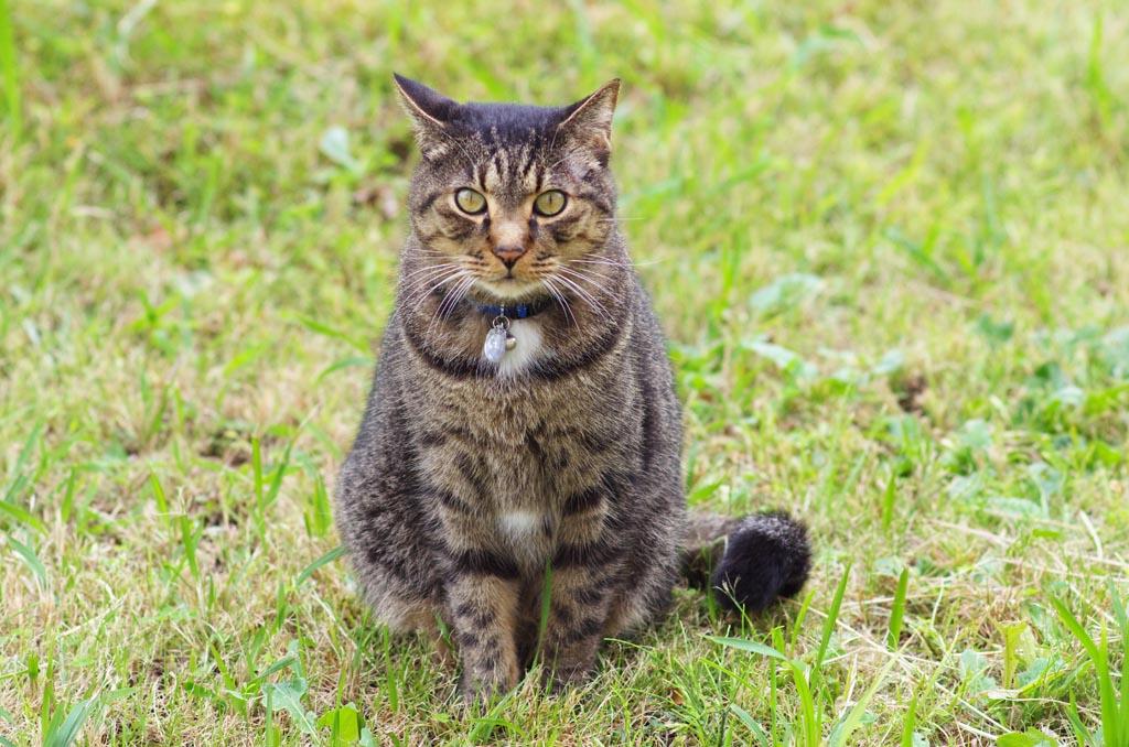 猫の世界_d0192516_18173223.jpg