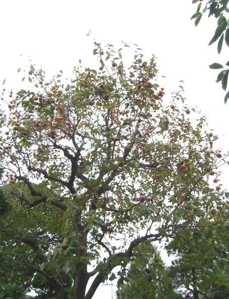 秋の色・その2_b0206421_13573950.jpg