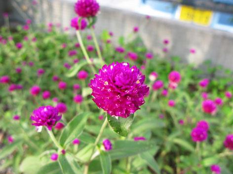 秋の庭  その2_f0129726_22423347.jpg