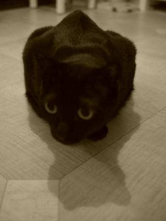 ひとこぶらくだ猫 のぇる編。_a0143140_2339350.jpg