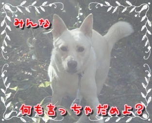 f0195543_23125834.jpg