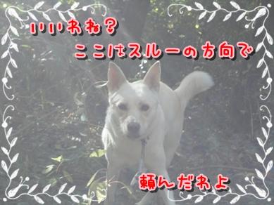 f0195543_23141927.jpg