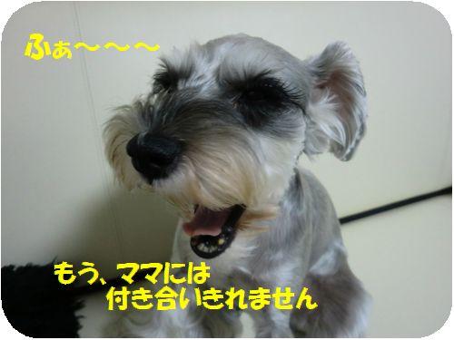 b0206444_133055.jpg