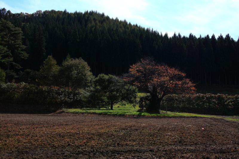 大洞の山桜(秋)_e0183063_17262738.jpg