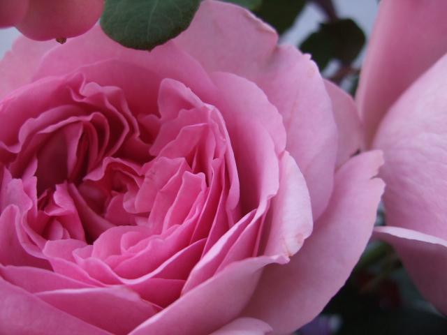 オークリーフ(秋薔薇と実物の花束)_f0049672_11113746.jpg