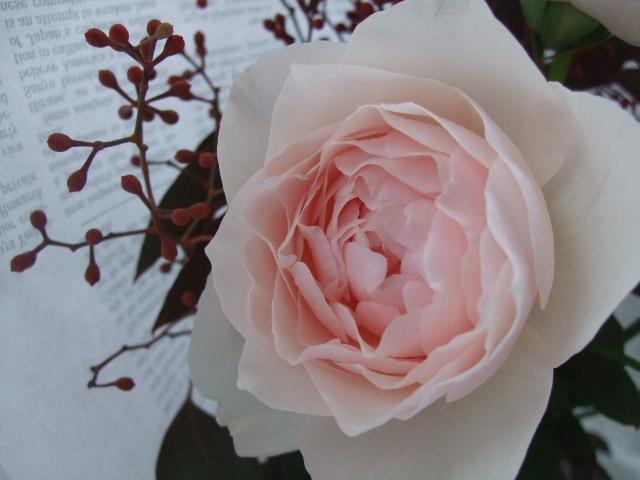 オークリーフ(秋薔薇と実物の花束)_f0049672_11154115.jpg