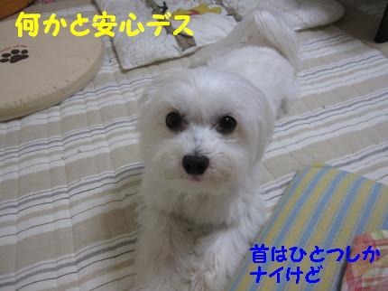 b0193480_16163272.jpg