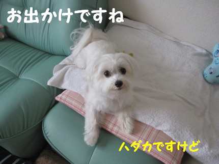 b0193480_1661165.jpg
