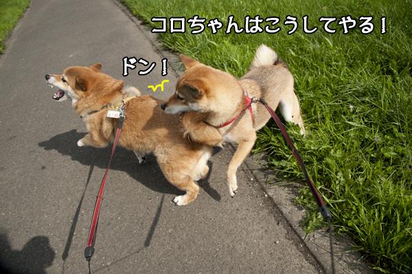 b0141397_11294059.jpg