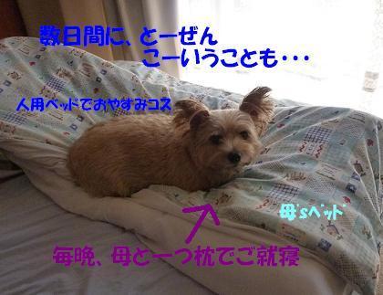 a0154801_10285010.jpg